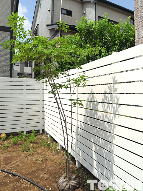 目かくしフェンスとアオダモ 植樹前