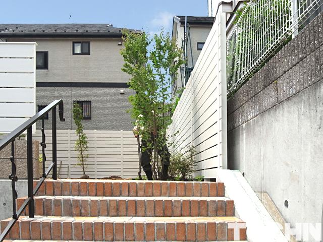 階段上に植えたカツラの木 町田市
