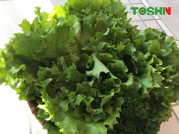 ベジトラグで新鮮野菜のサラダバー