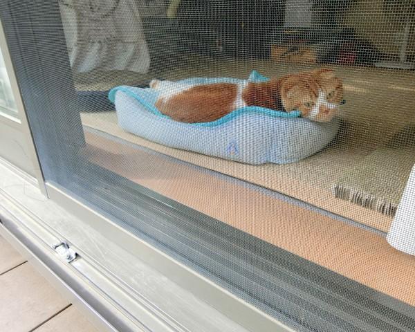 ウッドデッキ越しの猫ちゃん
