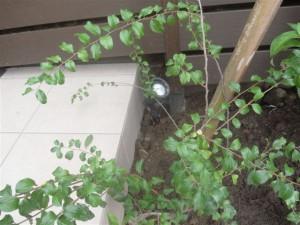 ガーデンアップライトの照明設置工事
