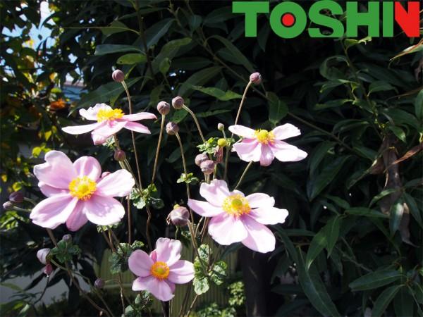 展示場の花たち