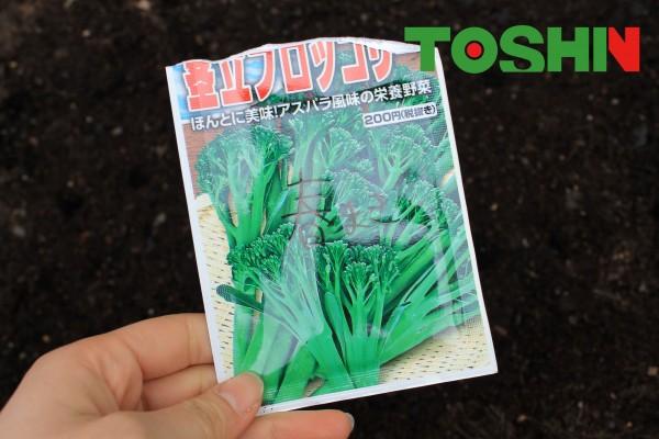 簡単家庭菜園 茎立ブロッコリーの種まき