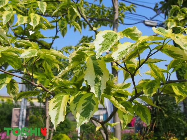新緑の眩しい季節です!