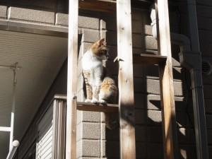 ねこちゃん用外階段