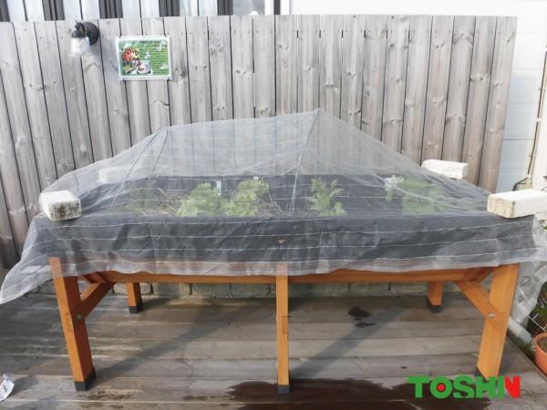 菜園で緑一色の野菜を大量に収穫