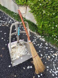 東神ハウス展示場 散ったエゴノキの花のお掃除