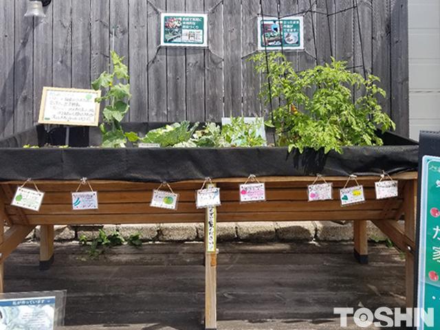 腰を屈めず家庭菜園ができるベジトラグ 相模原市