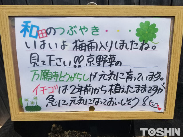 腰を屈めずに家庭菜園が出来るベジトラグ担当 和田のつぶやき